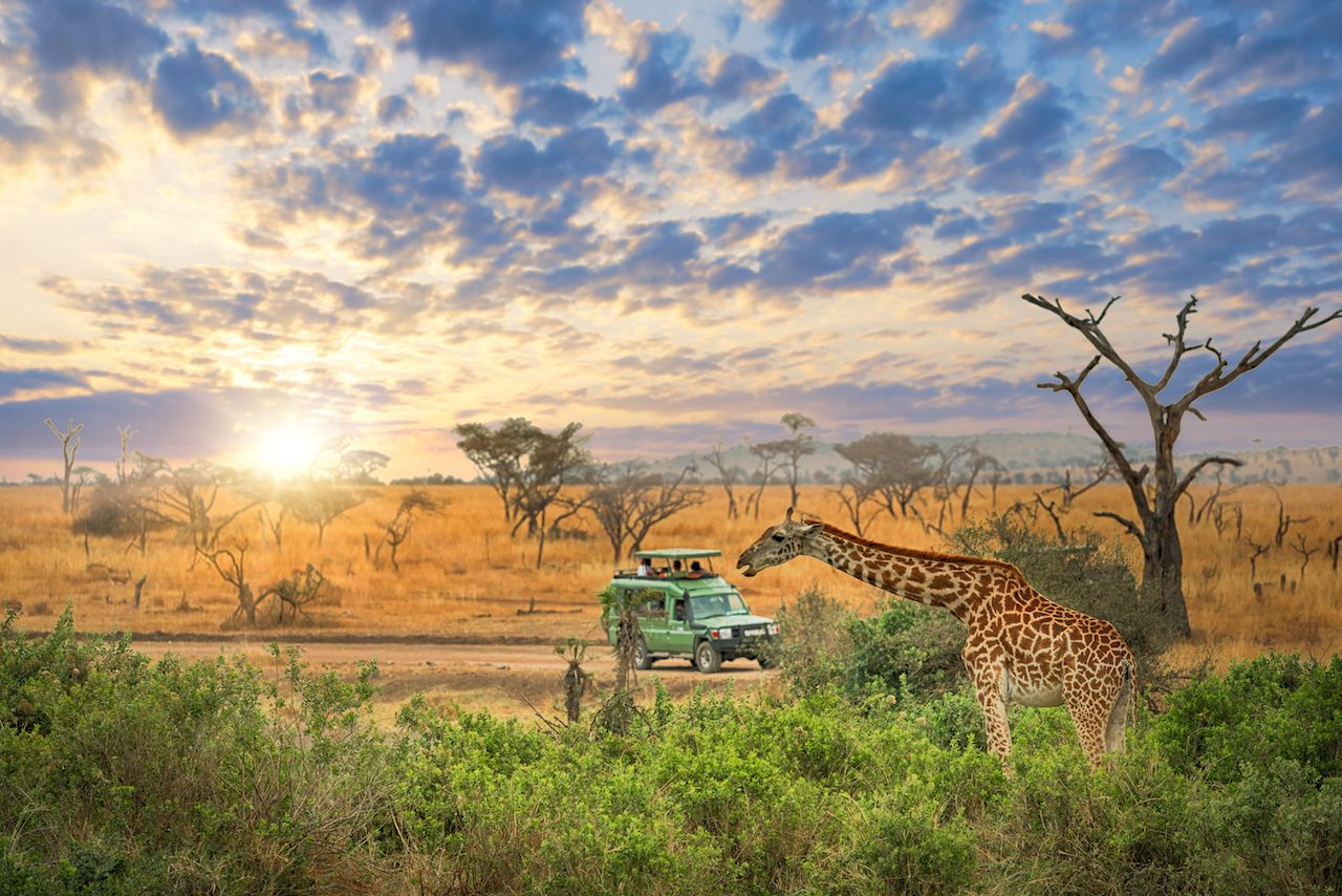 Amazing Tanzania Serengeti Natural Park