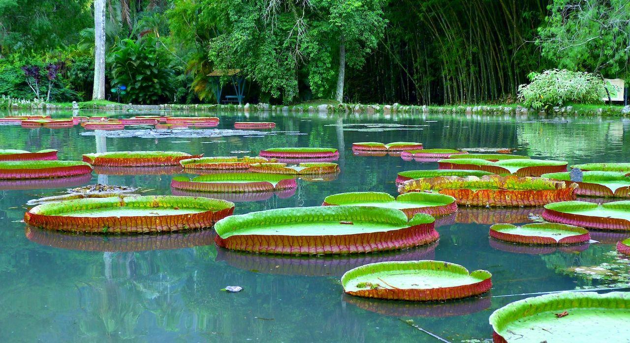 Botanical garden, Rio de Janeiro