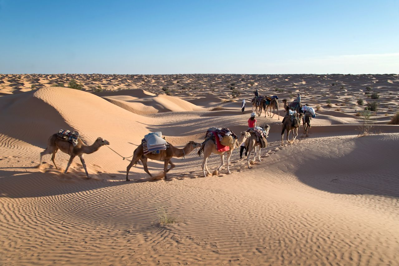 Caravan of Camels in the Sahara desert sand dunes, South Tunisia