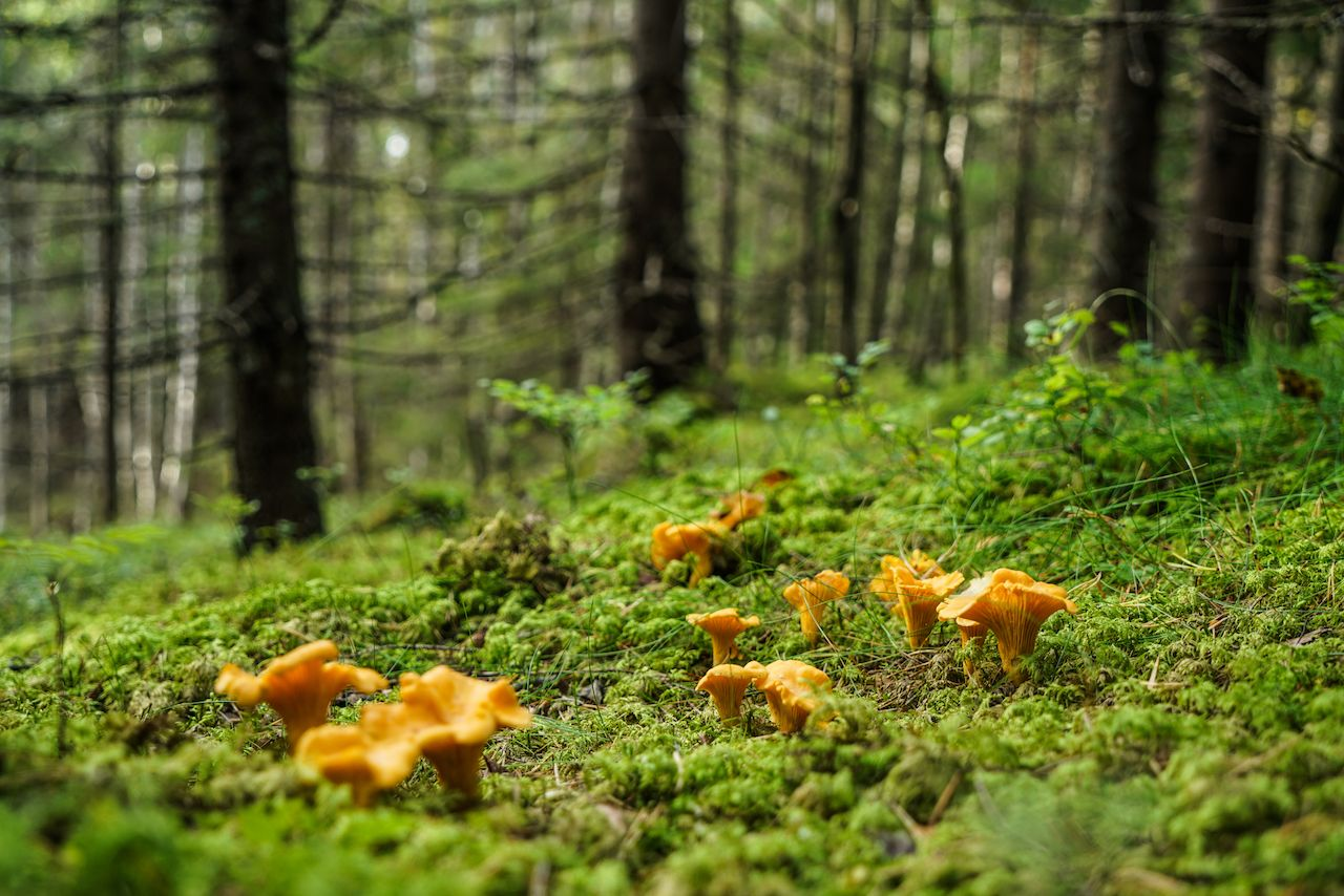 The best tips for edible mushroom hunting in Oregon