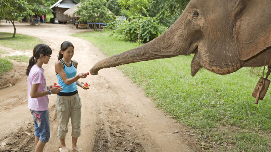 Children feeding an elephant