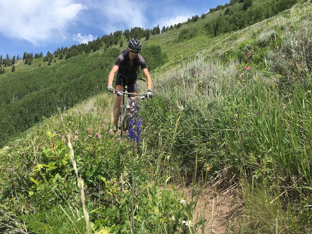 Cyclist riding through wildflowers