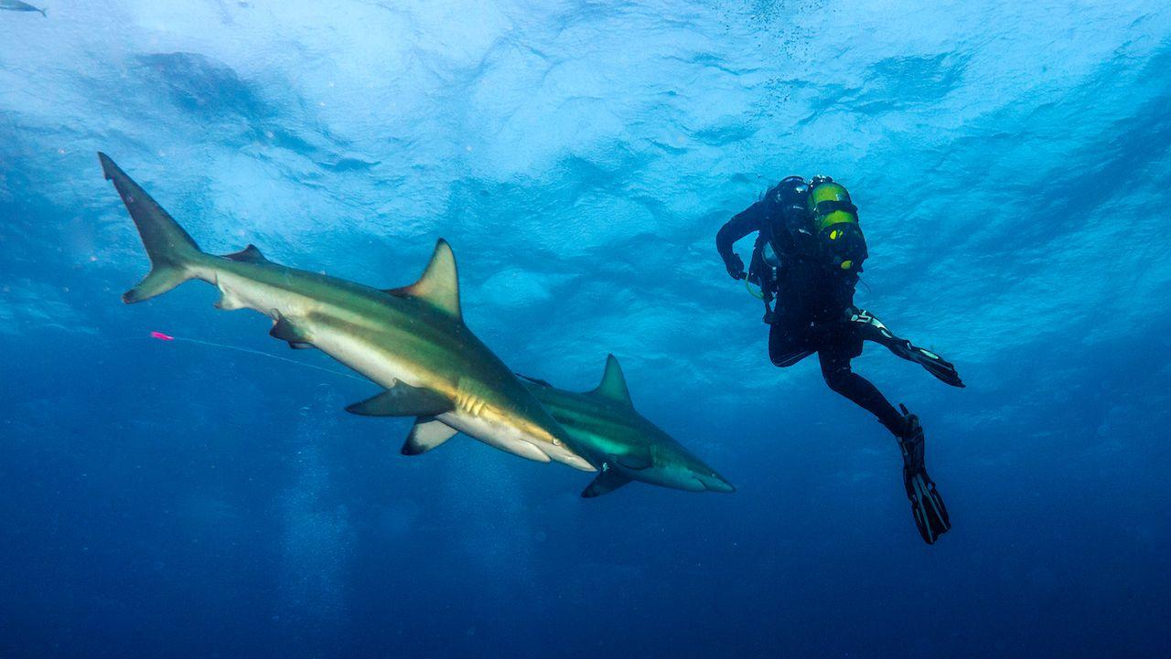Most underrated scuba diving sites