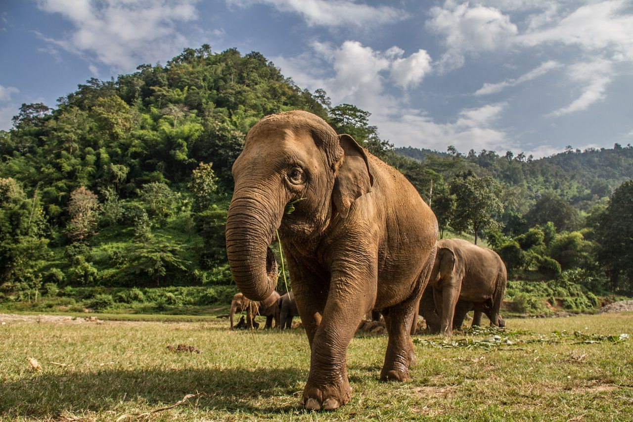 Elephants in Chiang Mai's Elephant Nature Park