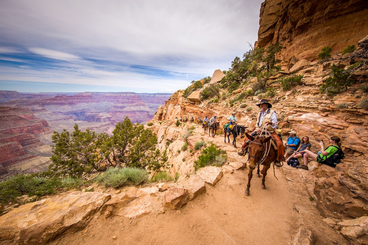 Horseback riding Grand Canyon