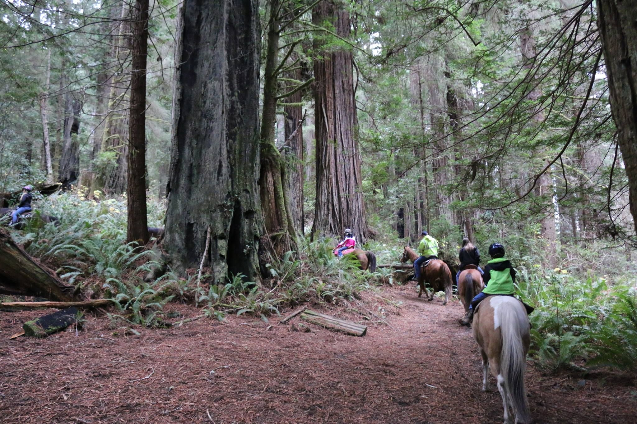 Horseback riding in Redwood Creek