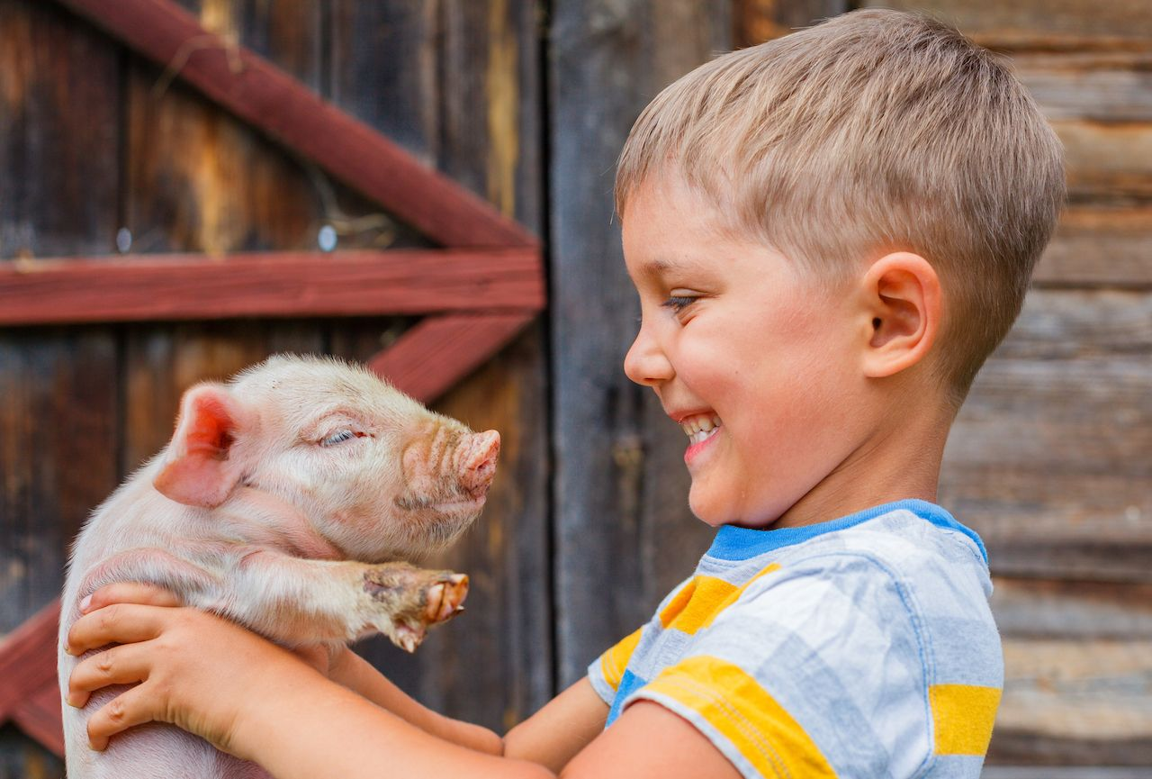Kid holding a piglet