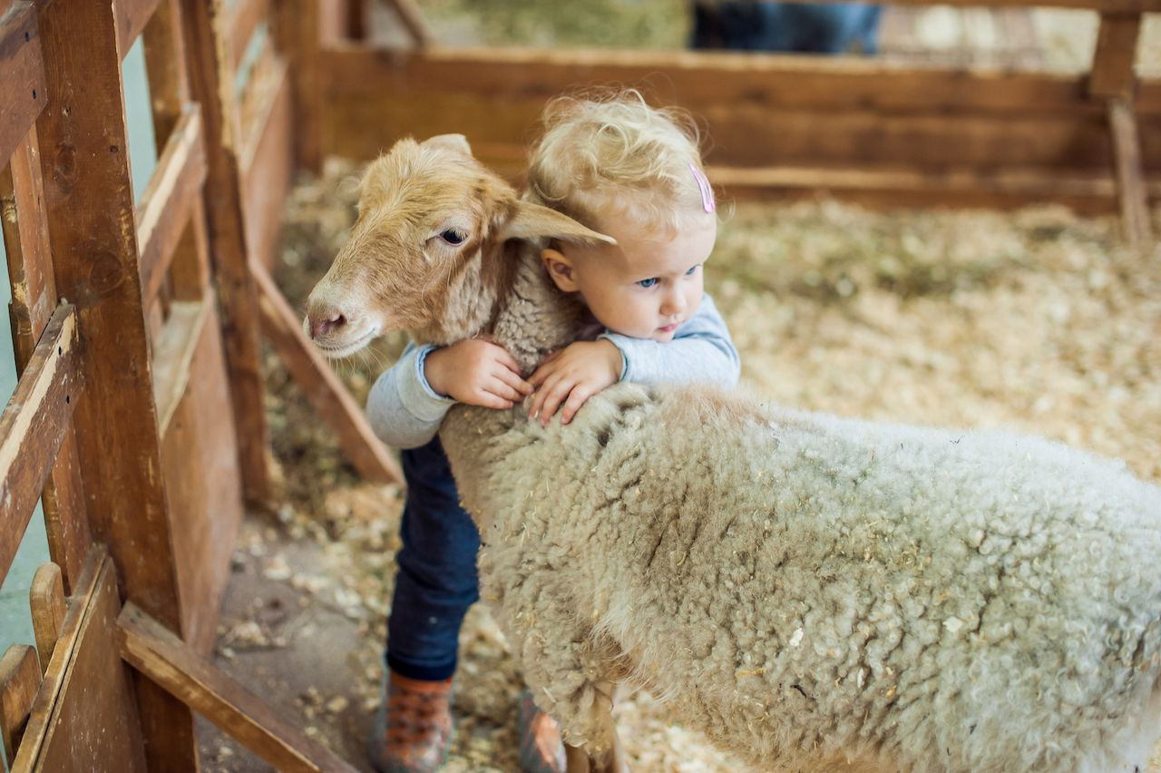 Kid hugging a sheep