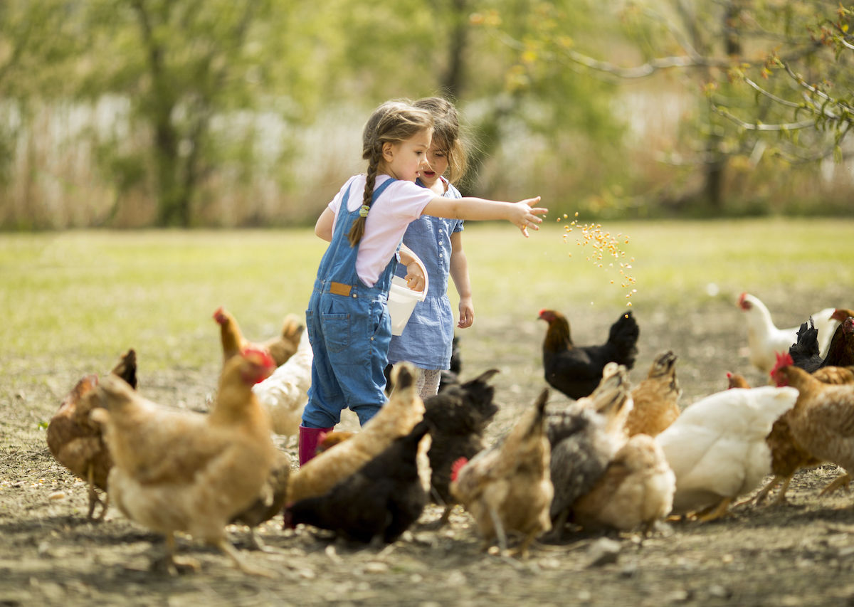 Why farm stays are awesome family vacations