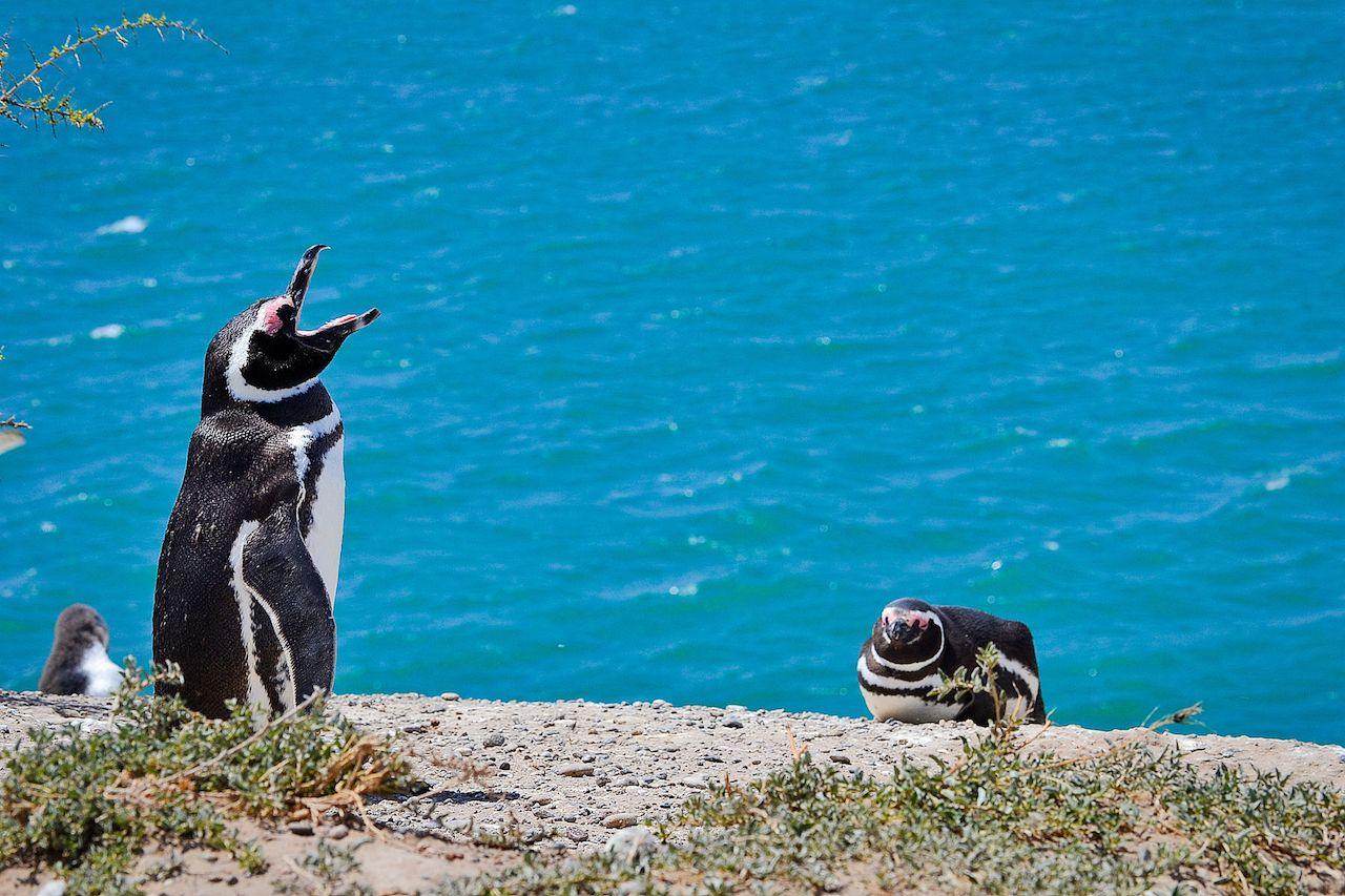 Wildlife watching Patagonia