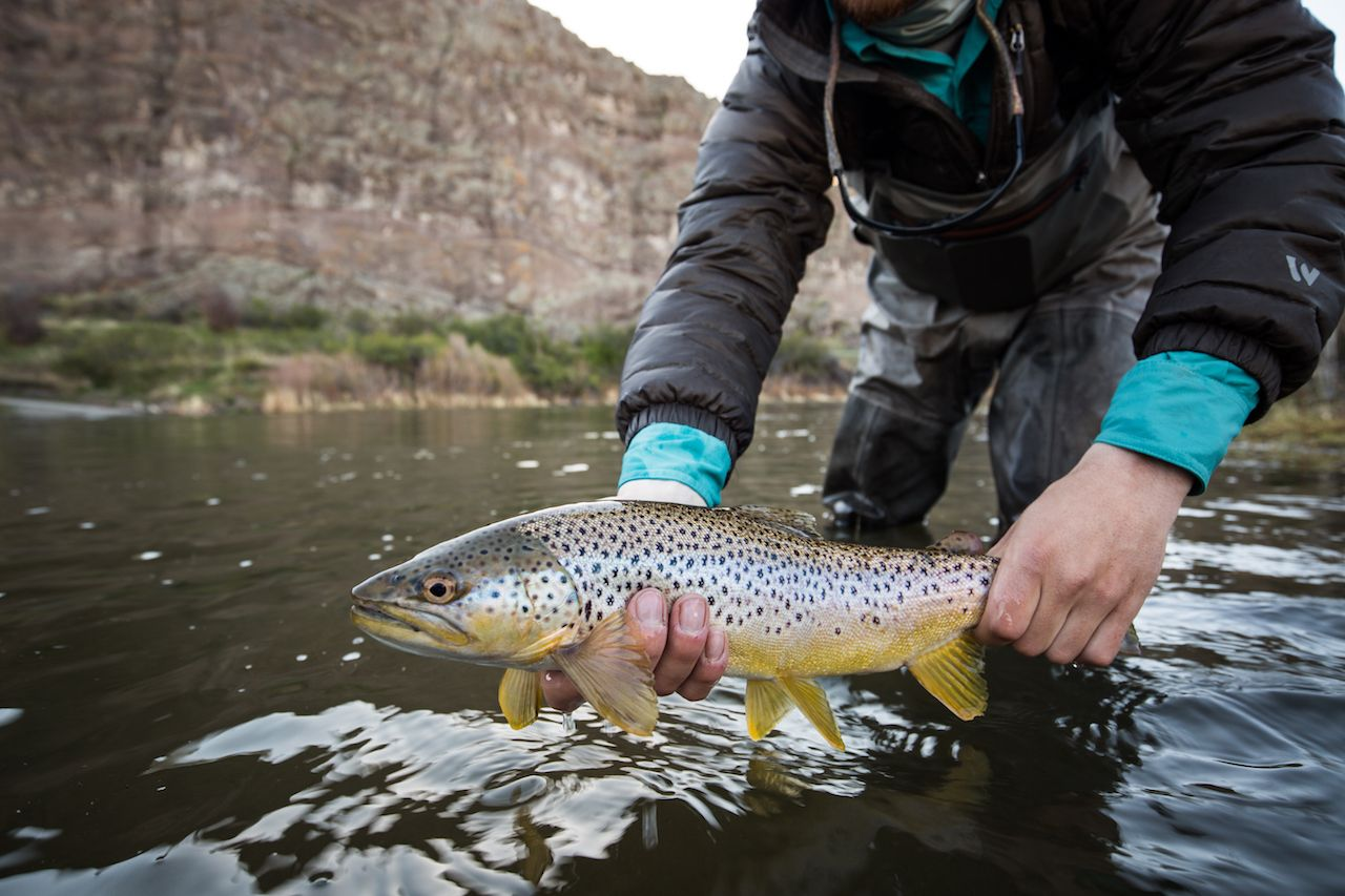 Man holding freshly caught brown trout