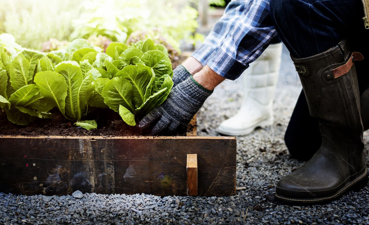Gardening can help you be healthier