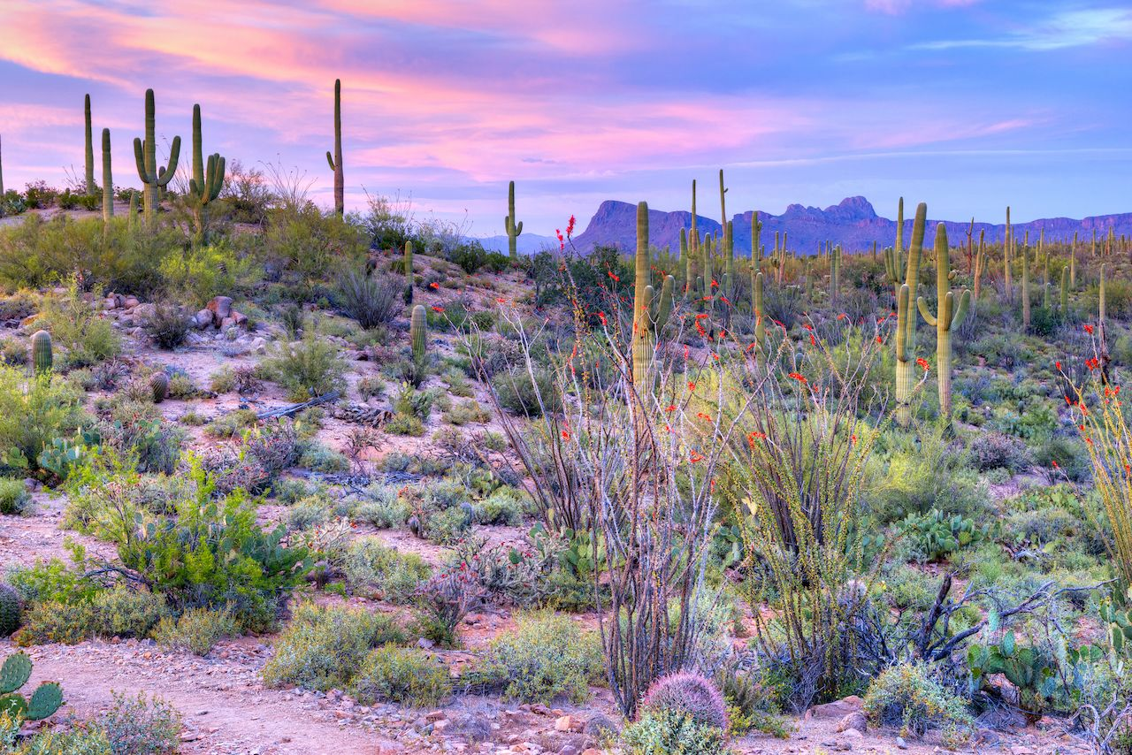 Sunset in Saguaro National Park near Tucson, Arizona