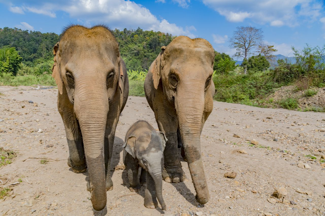 Thailand elephant rescue