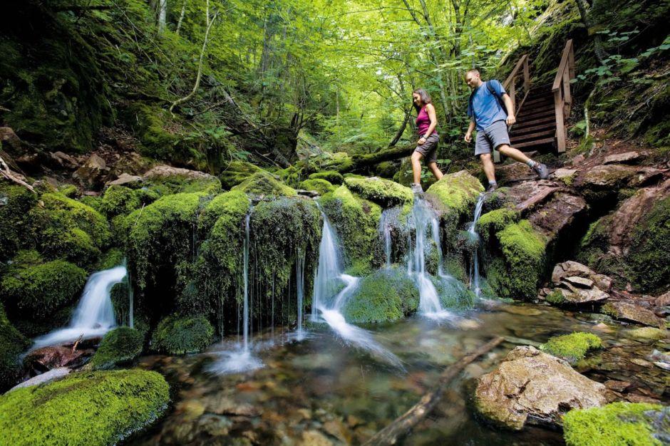 Tourism New Brunswick Fundy National PArk hiking trail