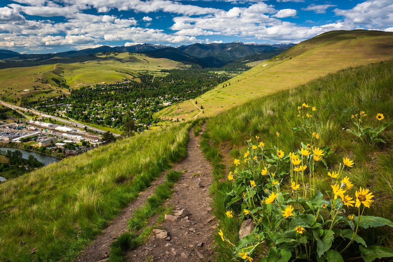 Trail and flowers on Mount Sentinel, Missoula, Montana