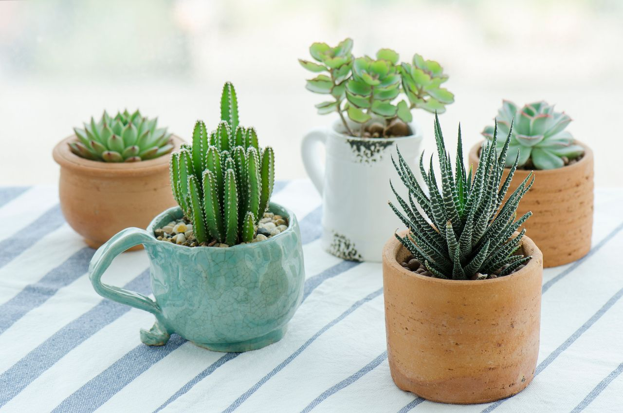 Various types of succulents