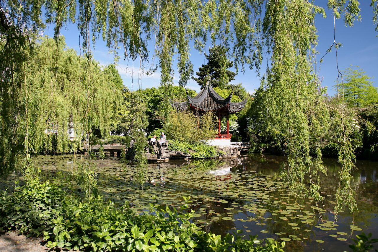 Vibrant Chinese Garden