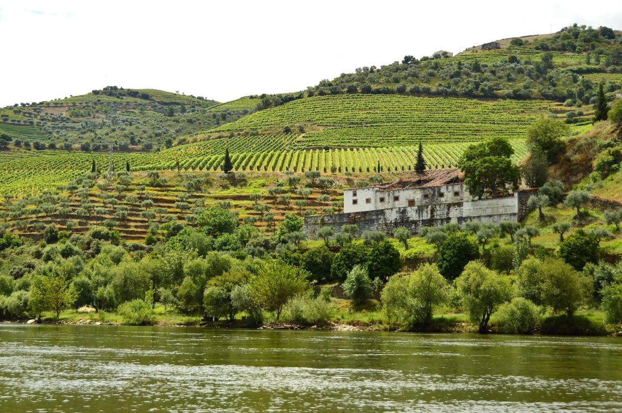 Vineyards in the Valley of Douro River, Pinhao, Portugal