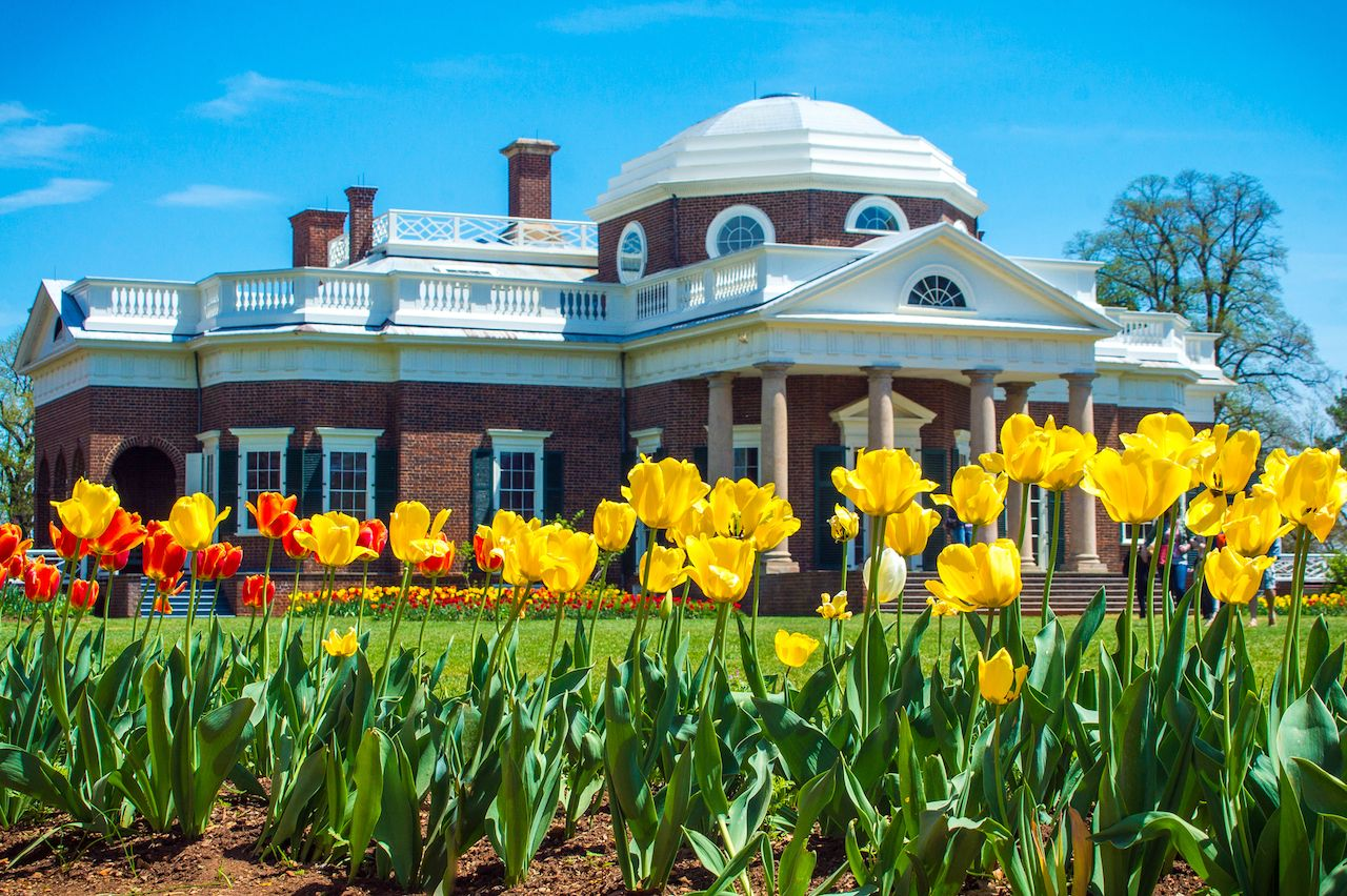 Yellow tulips with Monticello Home in background