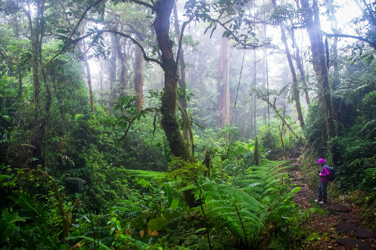 Monteverde Cloud Forest biodiversity