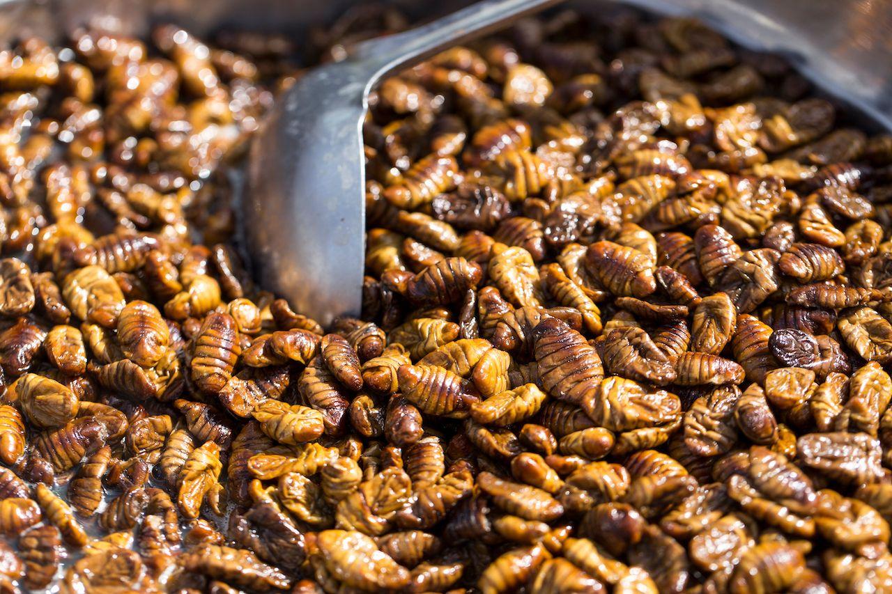 Beondeg, silkworm larvae