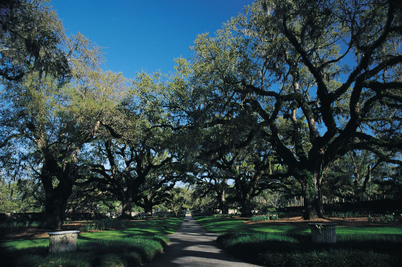Brookgreen Gardens Oak Alley