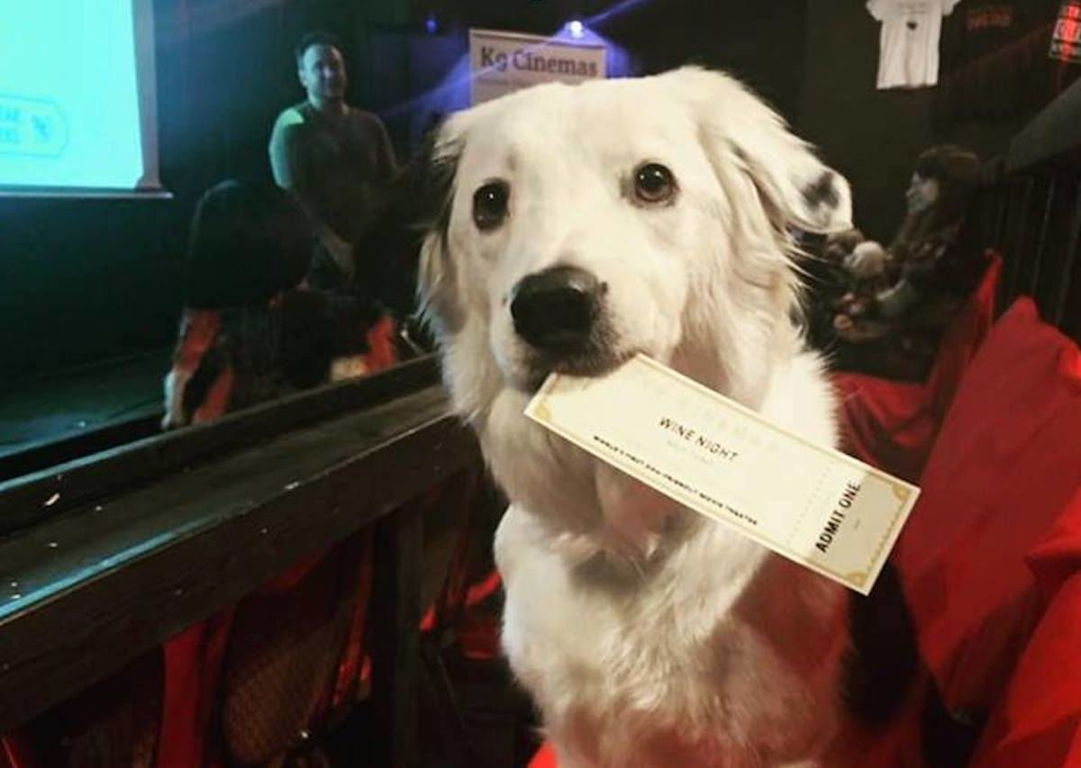 This Texas movie theater is dog-friendly and provides unlimited wine