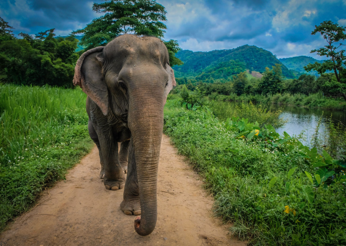 How to have an ethical wildlife experience in Thailand