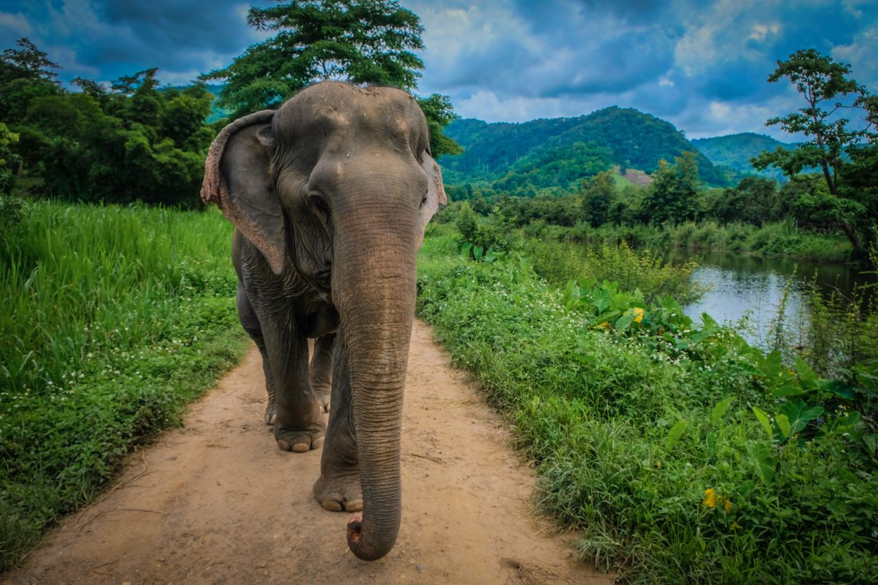 Wildlife experiences in Thailand