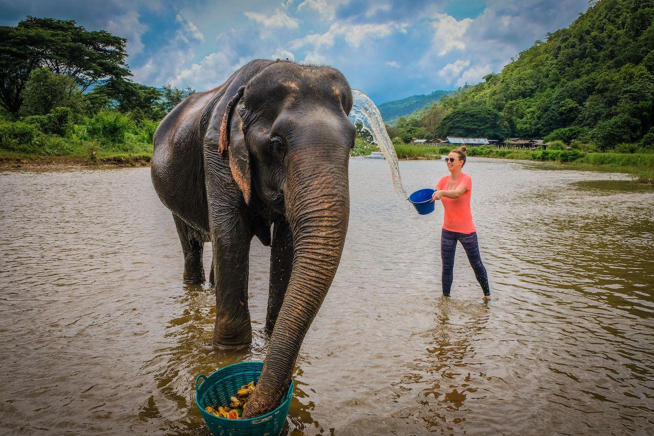 Female tourist baths an elderly female Asian elephant