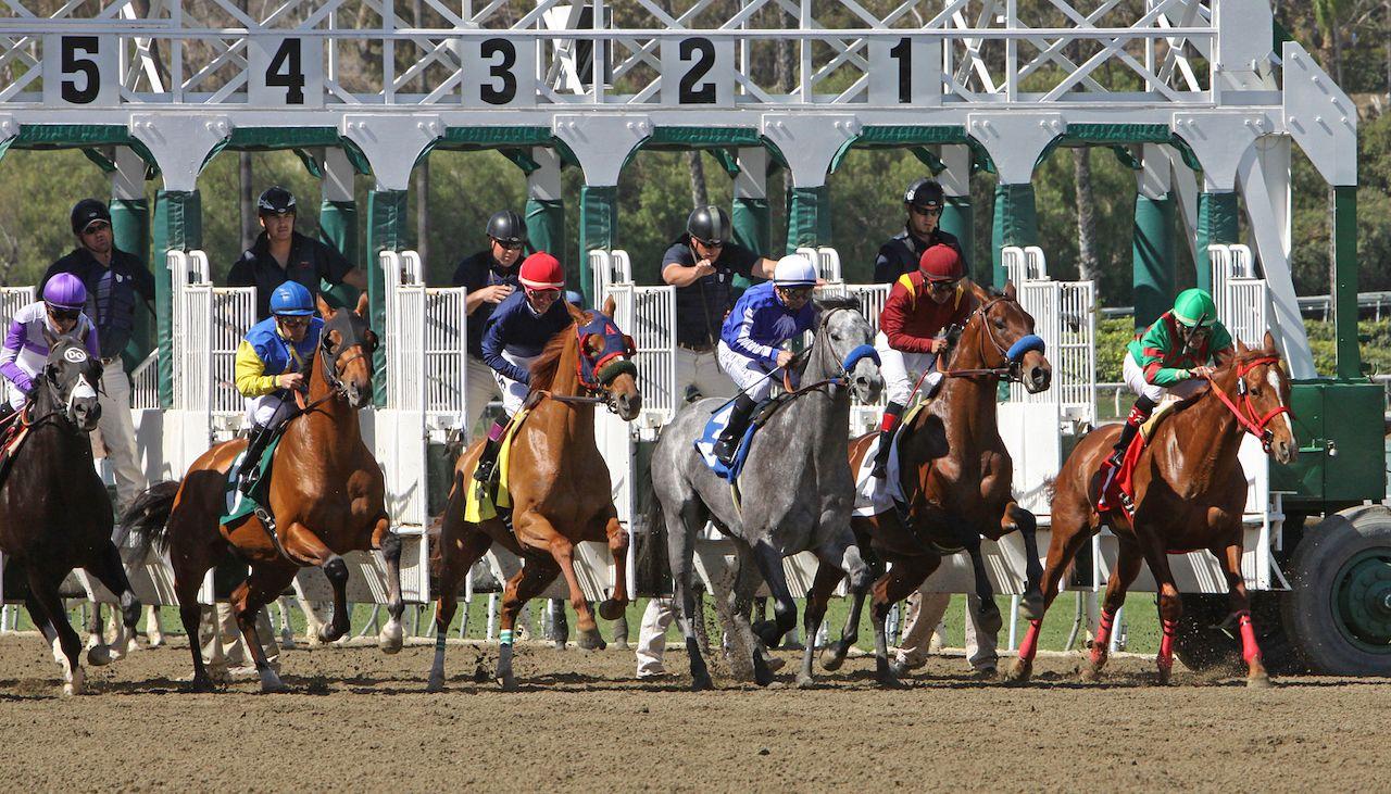 Horses and jockeys racing at the Santa Anita Race Track