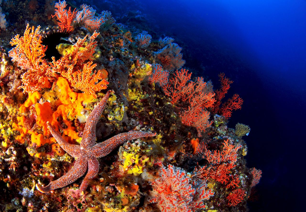 Korura underwater image Ulleungdo