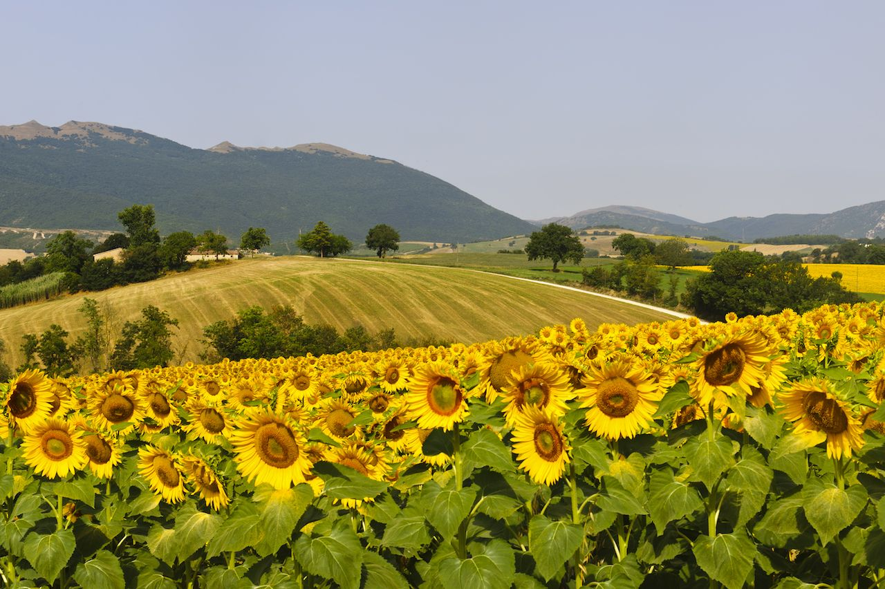 Best things to do in Marche, Italy