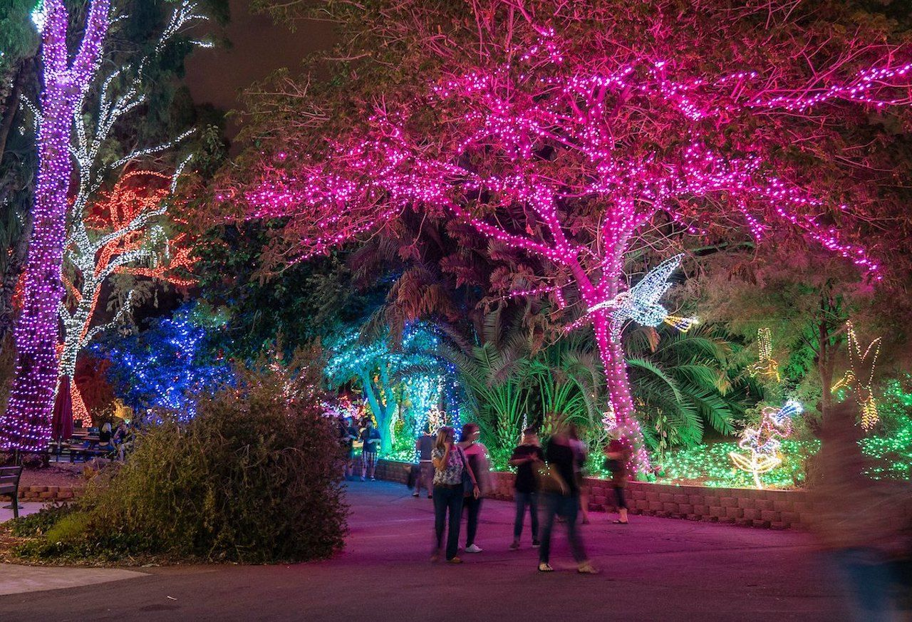 Phoenix Zoo at night with lights strung in the trees