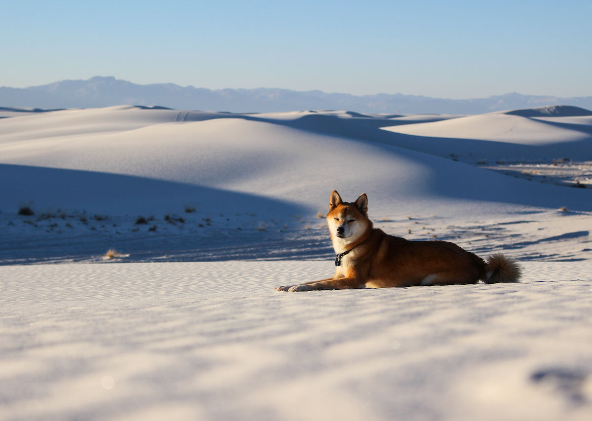 White Sands National Monument is the best natural place in the US to take your dog