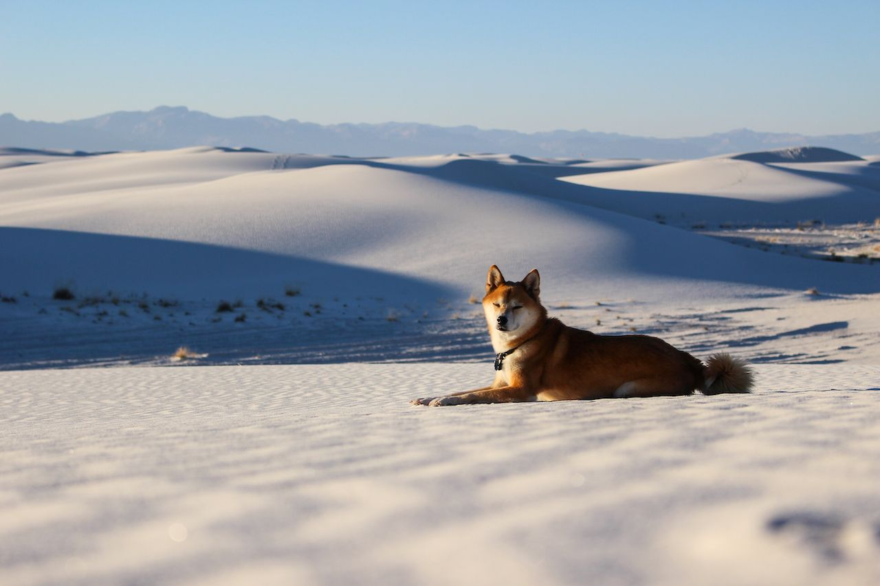 Dogs welcome at White Sands park