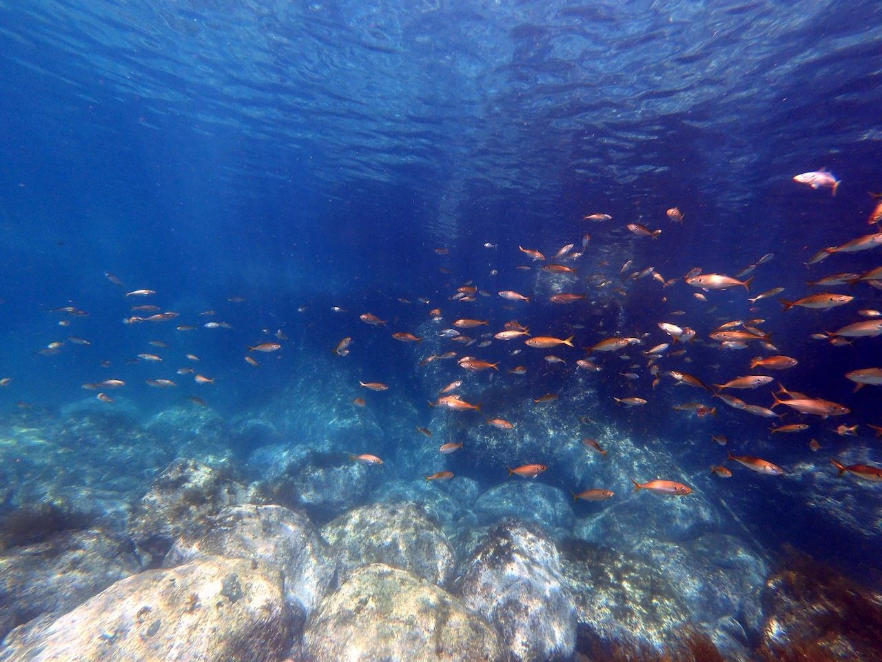 Snorkeling on Ulleungdo fish