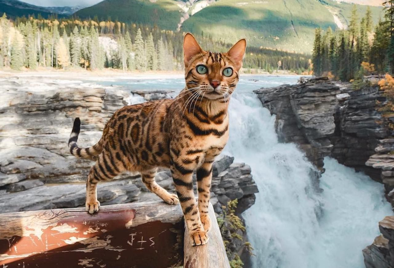 Traveling and hiking with cats
