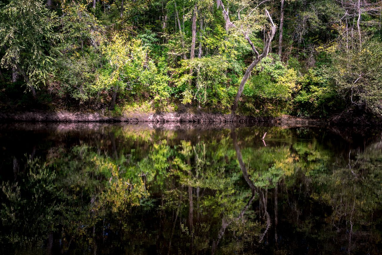 The black waters of the Edisto river in South Carolina