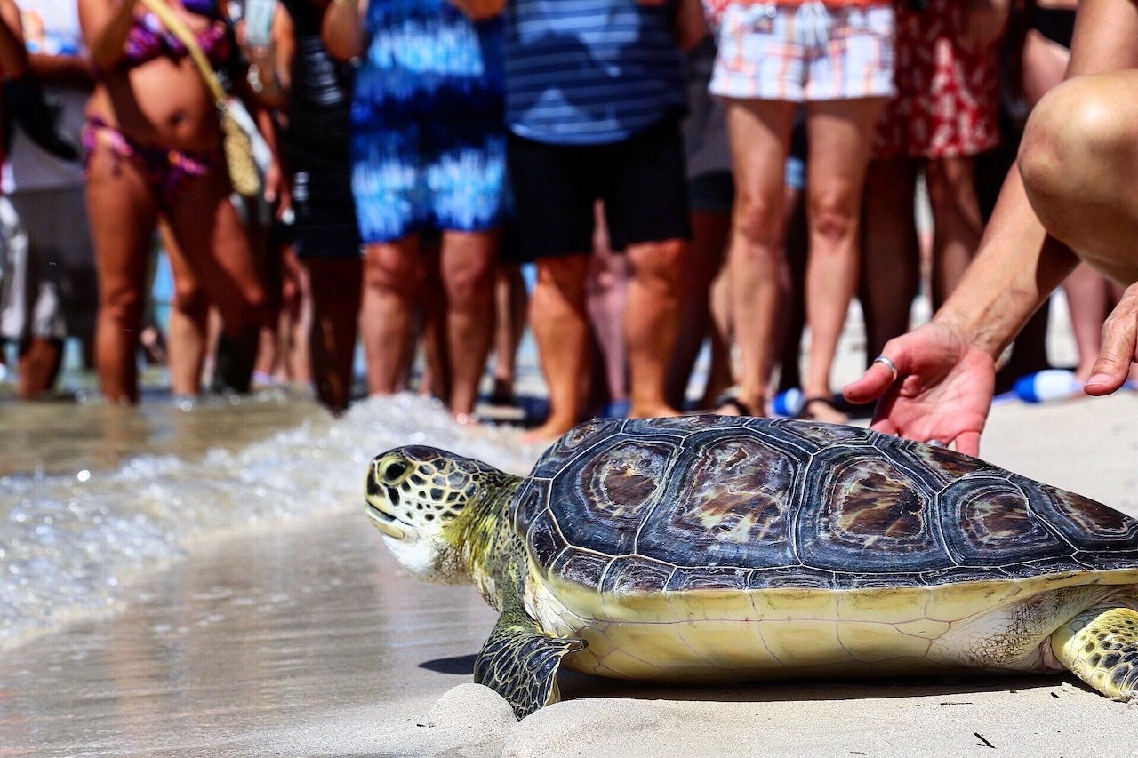 Turtle release in Florida Keys