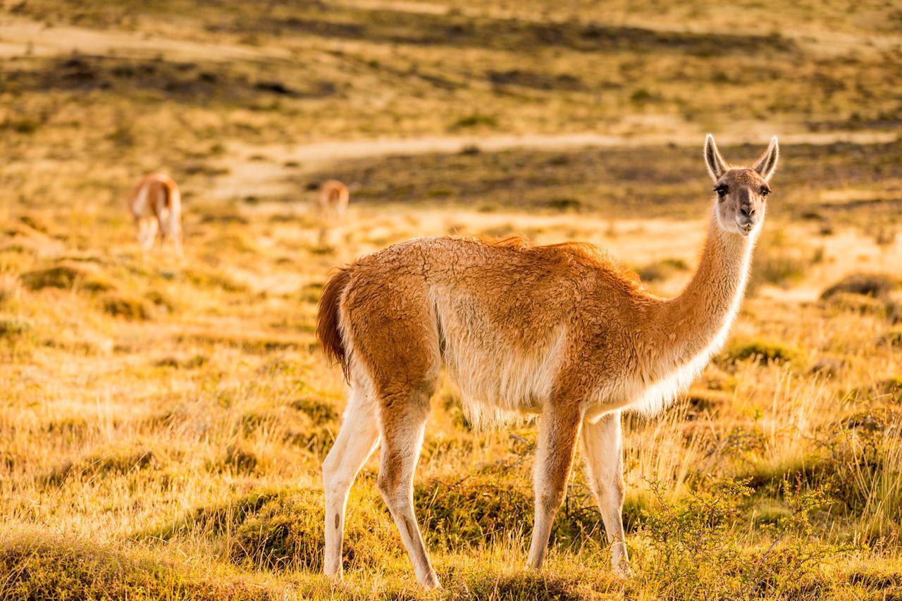 Wildlife in Patagonia