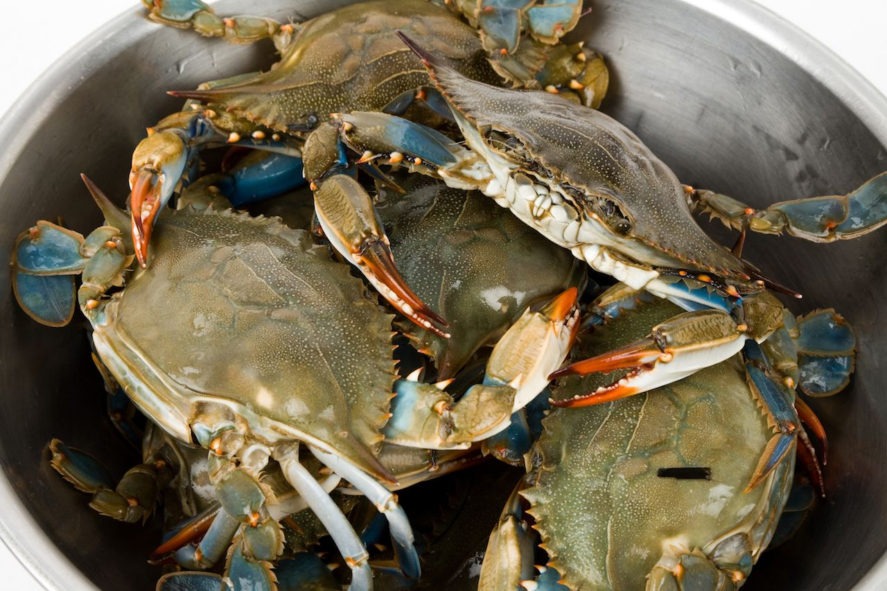 blue crab bucket