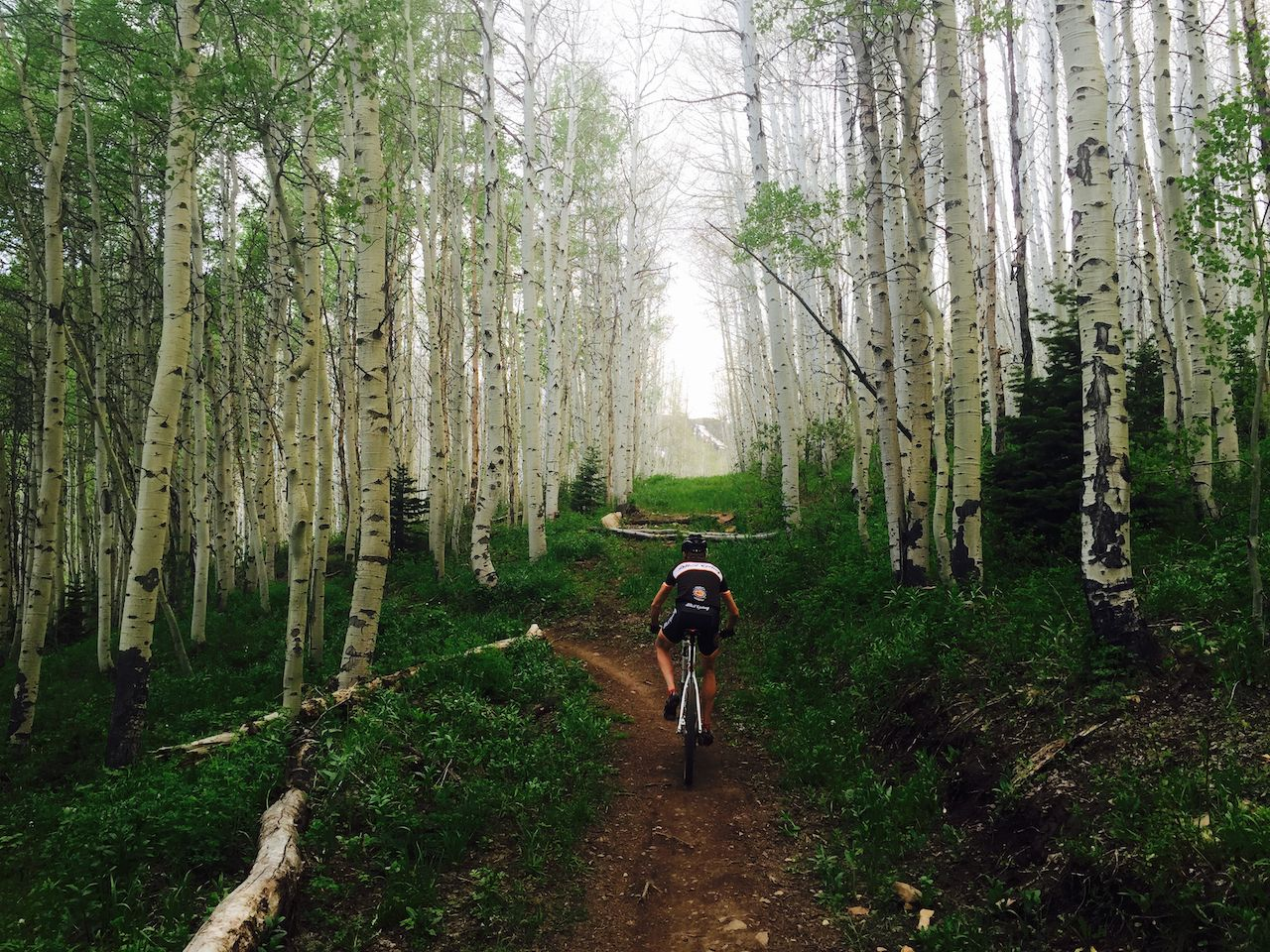 cyclist pedals a mountain bike down a single track trail through a grove of aspen trees in park city, utah