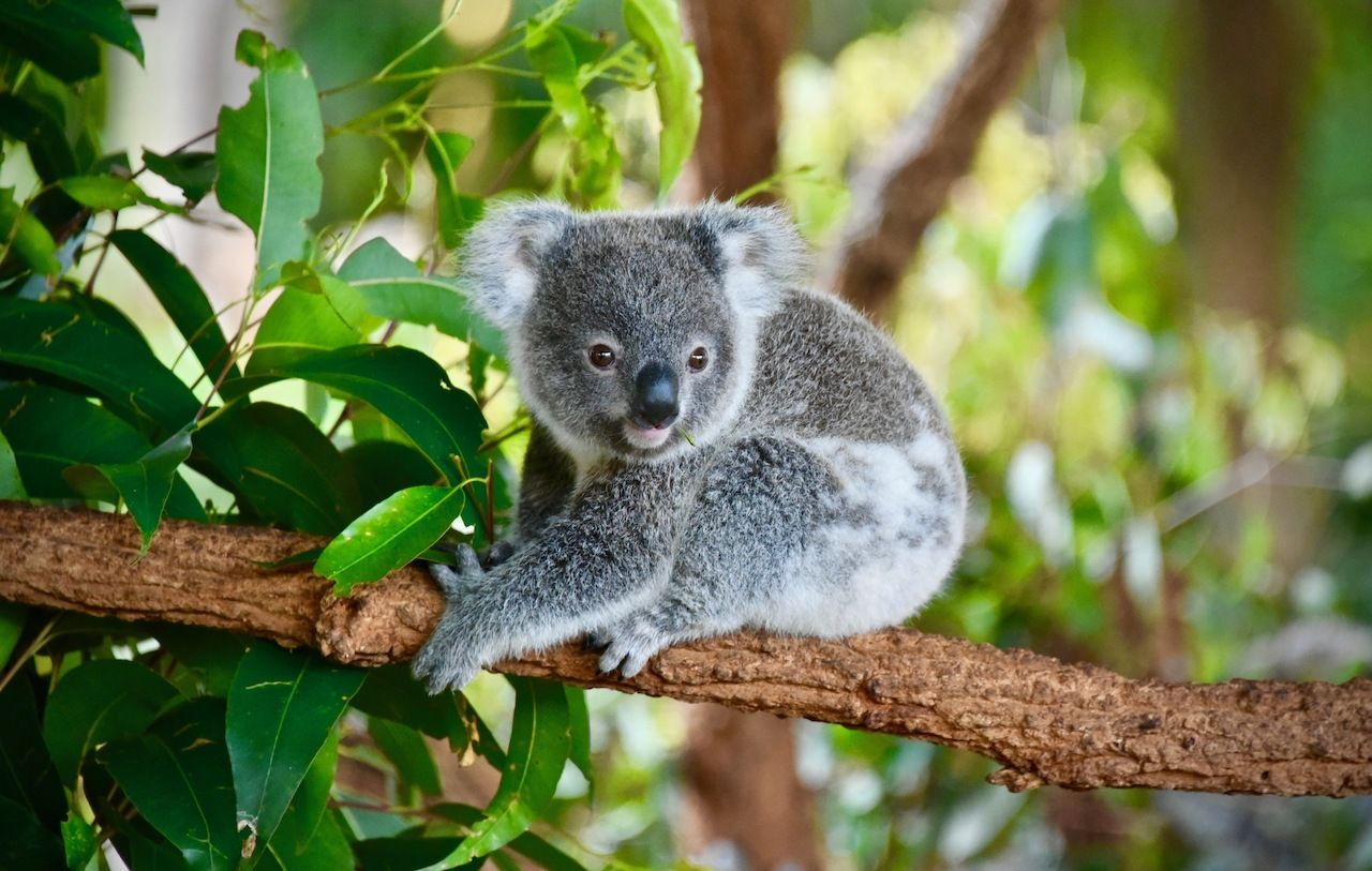 Overnight at Sydney's Taronga Zoo