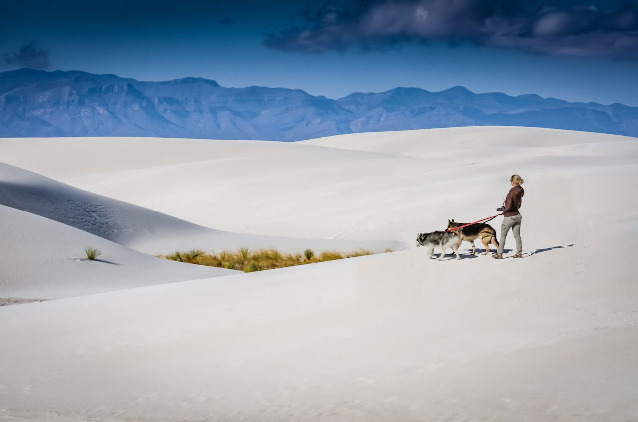 woman walking two German Shepards on the gypsum dunes at White Sands National Monument