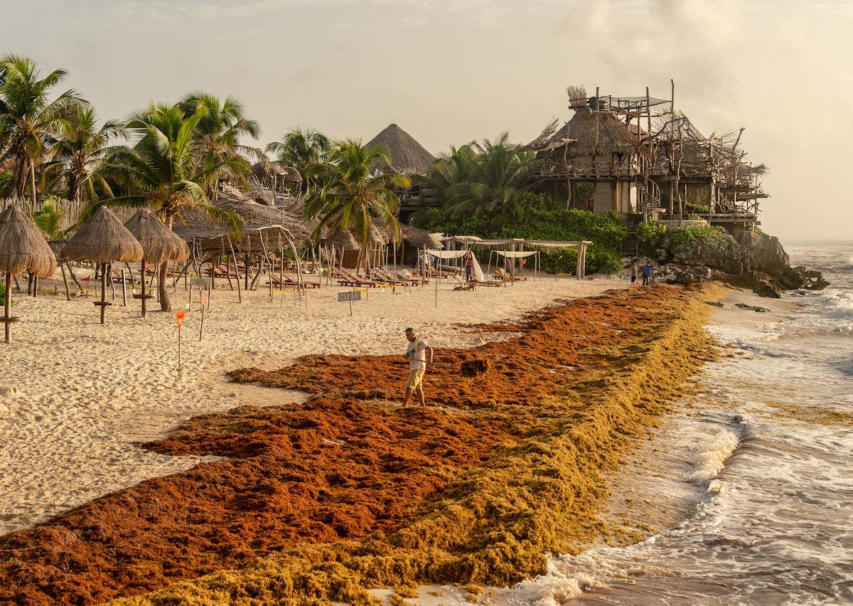 Mexico beaches hit with algae infestation