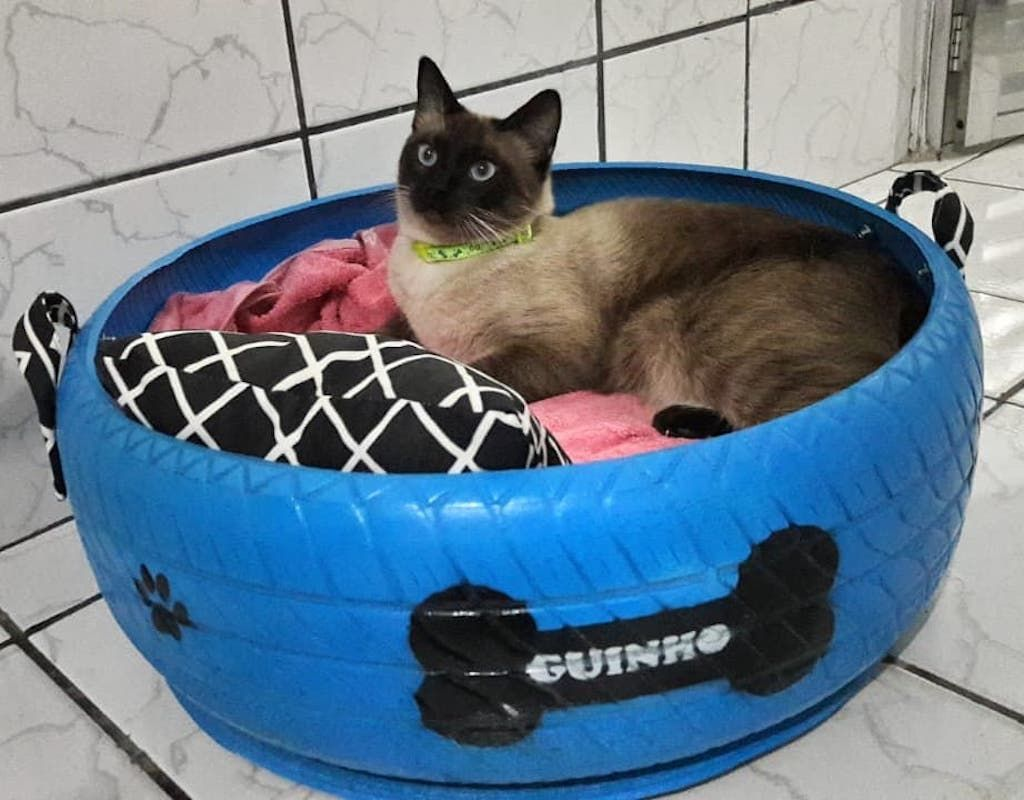 Cat in pet bed made out of a tire