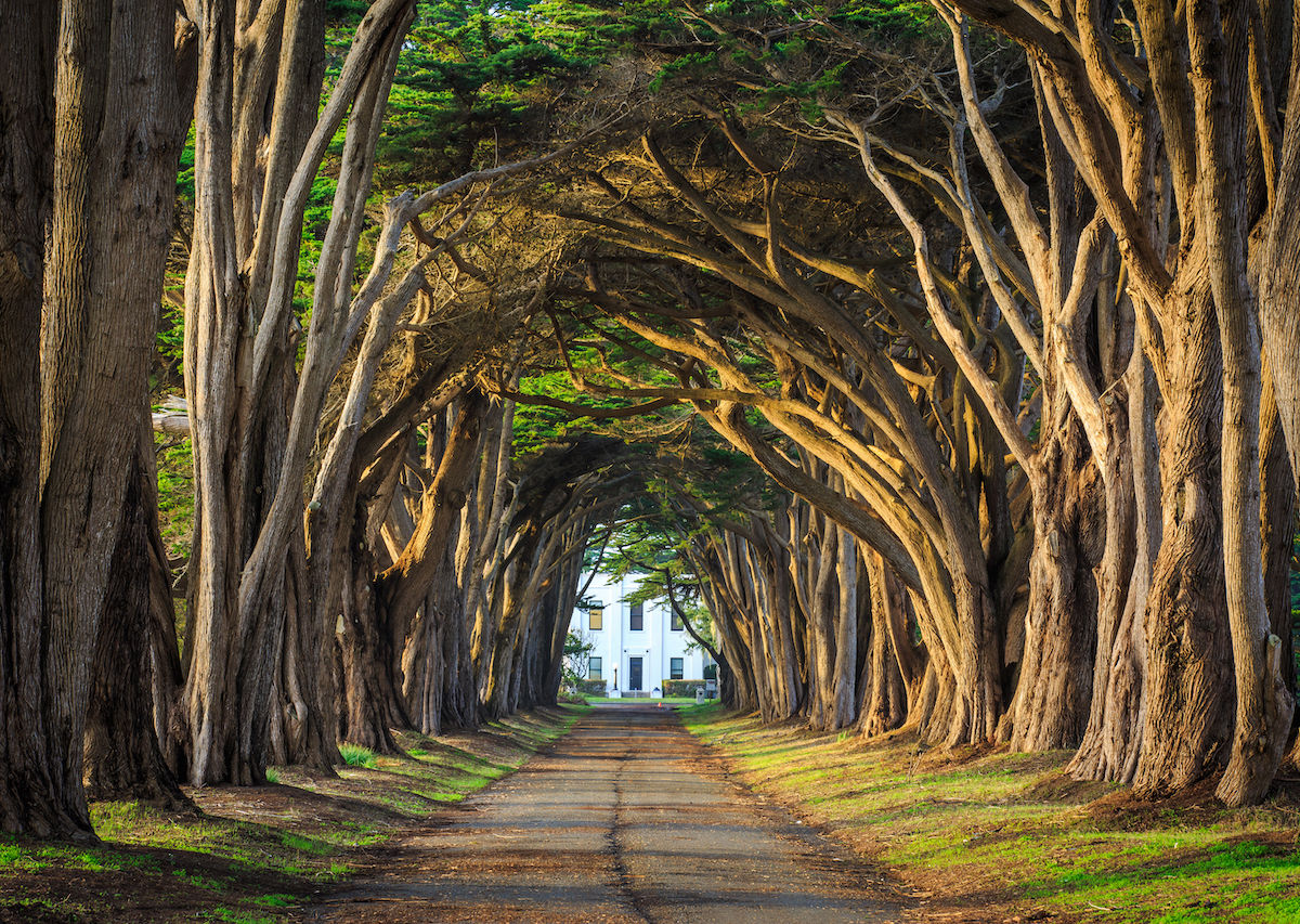 The 7 coolest tree tunnels around the world