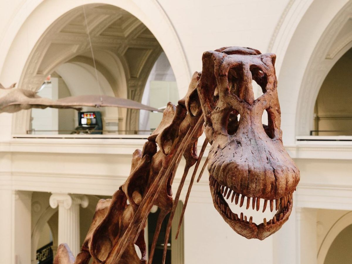 The 11 best natural history museums in the world